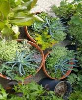 Succulent Bowl Plants, Succulents, & Terrariums