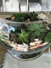 Succulent bowl  Succulents