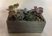Succulent Box