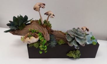 Succulent box Earthy arrangement