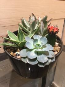 Succulent & Cactus Garden