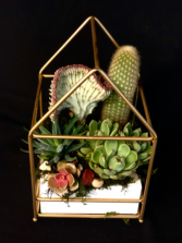 Succulent & Cactus Home