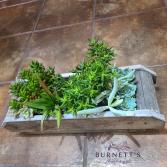 Succulent Centerpiece  Plant