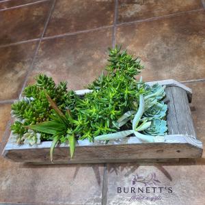 Succulent Centerpiece  Plant in Kelowna, BC | Burnett's Florist