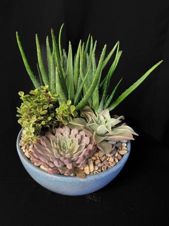 Succulent Ceramic Dish Garden