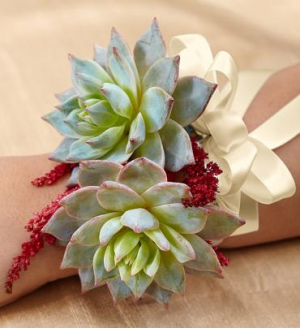 Succulent Corsage in Croton On Hudson, NY | Cooke's Little Shoppe Of Flowers