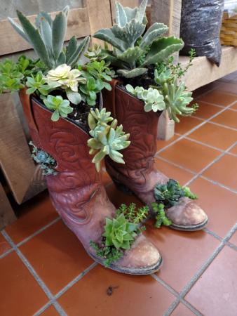 Succulent Cowboy Boot