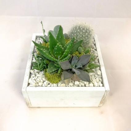 Succulent Wooden Box