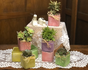 Succulent Cube Plant in Mazomanie, WI | B-STYLE FLORAL AND GIFTS