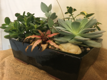 Succulent Desk Top Garden Succulent Planter