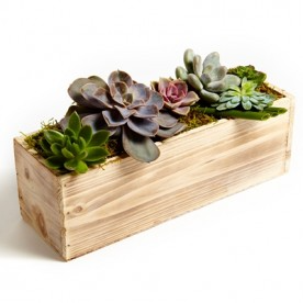 Succulent Dish Garden  in Allen, TX | Lovejoy Flower and Gift Shop