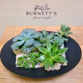 Succulent Dish Garden Plant