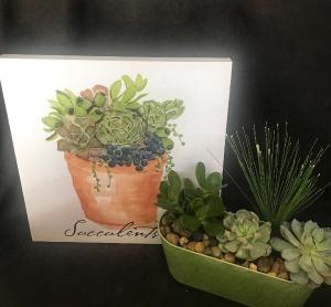 Succulent Display Living planter in Longview, WA | Banda's Bouquets