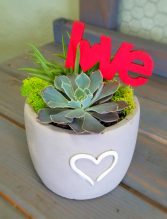 Succulent Double Love Valentine's Day