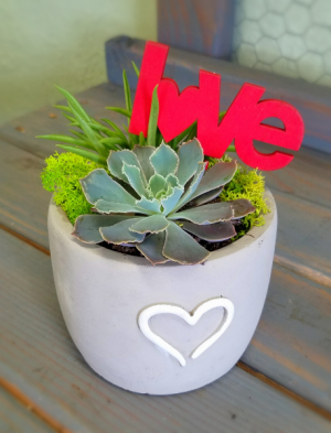 Succulent Double Love Valentine's Day in Clinton, OK | Prairie Sunshine Flowers & Balloons