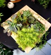 Succulent Framed Garden LIVE Wall Decor