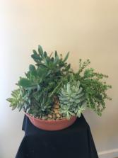 Succulent Garden  12 inch High by 18 inch wide