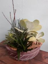 Succulent Garden Desert Landing Succulent