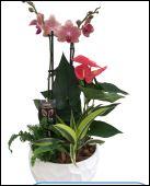 Medium tropical plant garden