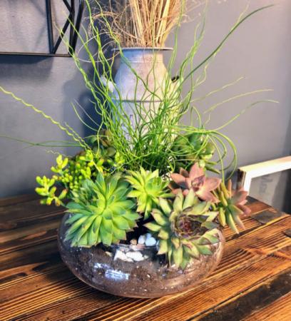 Succulent Oasis Custom Plant Design