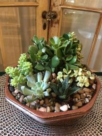"Succulent Garden (8""container) Plant"