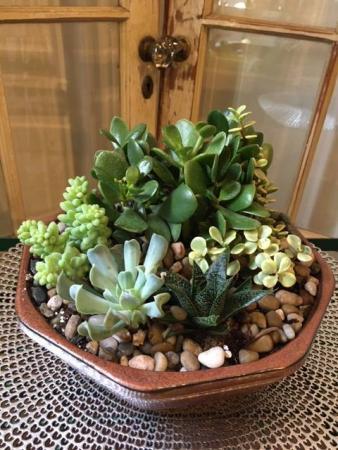 Succulent Garden (8