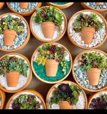 Succulent Garden Art Live succulent plants