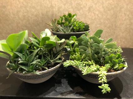 Succulent Garden Assorted Indoor Succulents