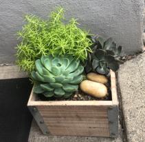 Succulent Garden Box Planter