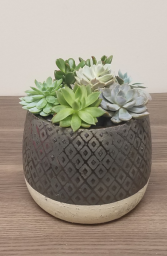 Succulent Garden - Bronze/Gold Diamond Pot