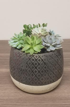 Succulent Garden - Bronze/Gold Diamond Pot