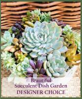 Succulent Garden Designer Choice