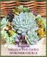 Succulent Garden SOLD OUT Designer's Choice