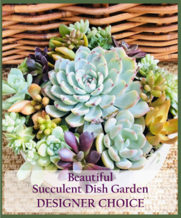 Succulent Garden Designer's Choice