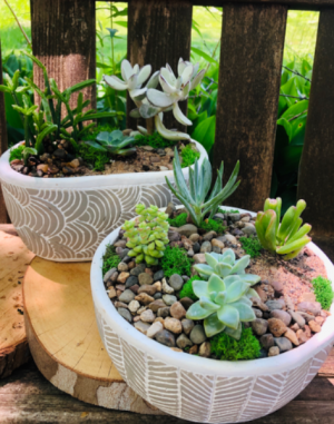 Succulent Garden Duo   in Iowa City, IA | Every Bloomin' Thing