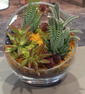 Succulent  Garden Father's Day