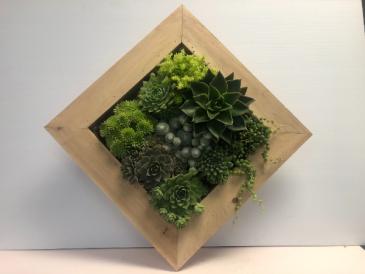 Succulent Garden Frame Succulent arrangement
