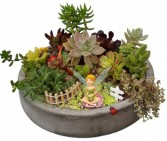Succulent Garden Fun and Vibrant