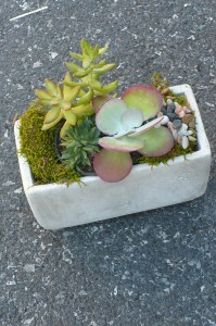 Succulent Garden Green Plant
