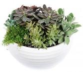 Succulent Garden Green Plants