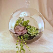 Succulent Garden in Glass Globe Plant Garden