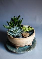 Succulent Garden in Handmade Footed Pottery Bowl Succulent Garden