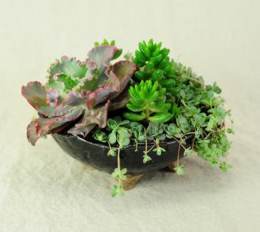 Succulent Garden in Handmade Pottery Succulent Garden