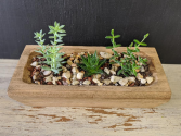 Succulent Garden in Wooden tray