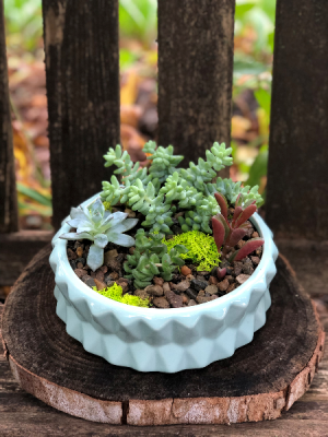 Succulent Garden  Lasting Gift  in Iowa City, IA | Every Bloomin' Thing