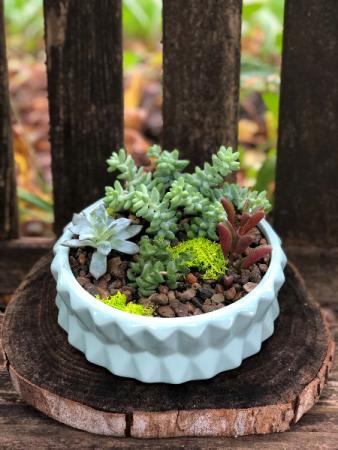 Succulent Garden  Lasting Gift