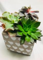 Succulent Garden of Love Plants