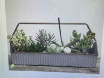 Succulent Garden In A Galvanized Ripple  Box PLANTER 6x18""