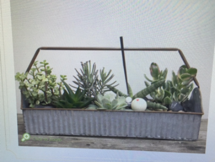 Succulent Garden In A Galvanized Ripple  Box PLANTER 6x18