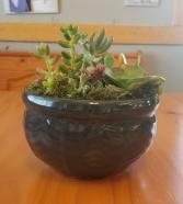 Succulent Garden(6in) Plant